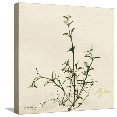 Thyme Moment-Albert Koetsier-Stretched Canvas Print
