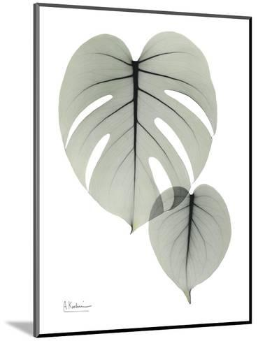 Split Leaf Philodendron Portrait-Albert Koetsier-Mounted Art Print
