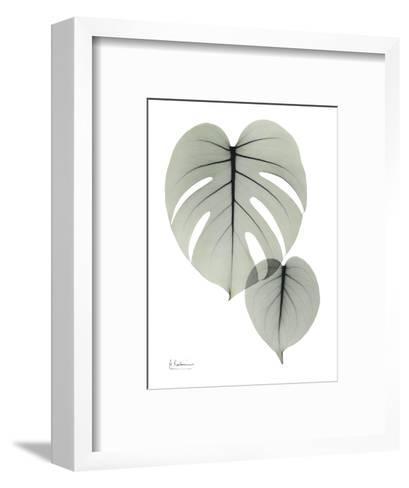 Split Leaf Philodendron Portrait-Albert Koetsier-Framed Art Print