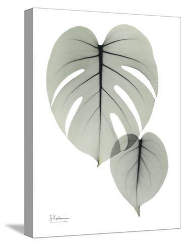Split Leaf Philodendron Portrait-Albert Koetsier-Stretched Canvas Print