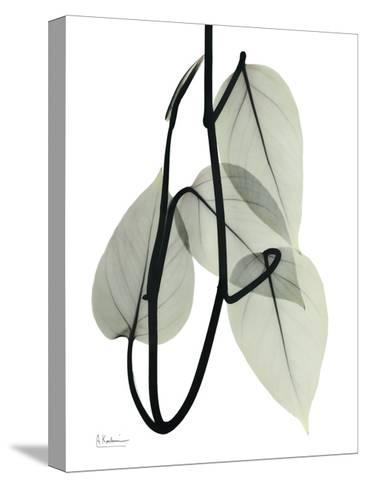 Pot Hos Leaf Portrait-Albert Koetsier-Stretched Canvas Print