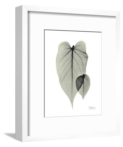 Philodendron Portrait-Albert Koetsier-Framed Art Print