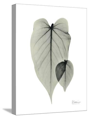 Philodendron Portrait-Albert Koetsier-Stretched Canvas Print