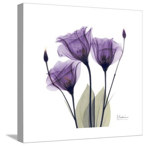 Royal Purple Gentian Trio-Albert Koetsier-Stretched Canvas Print