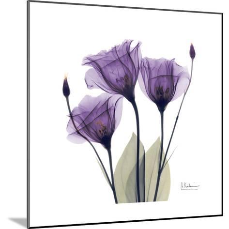 Royal Purple Gentian Trio-Albert Koetsier-Mounted Premium Giclee Print