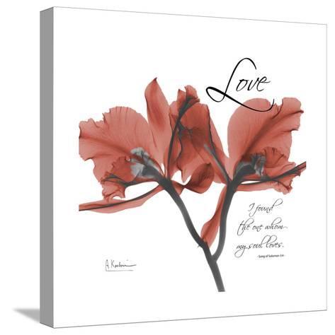 Love Orchid-Albert Koetsier-Stretched Canvas Print