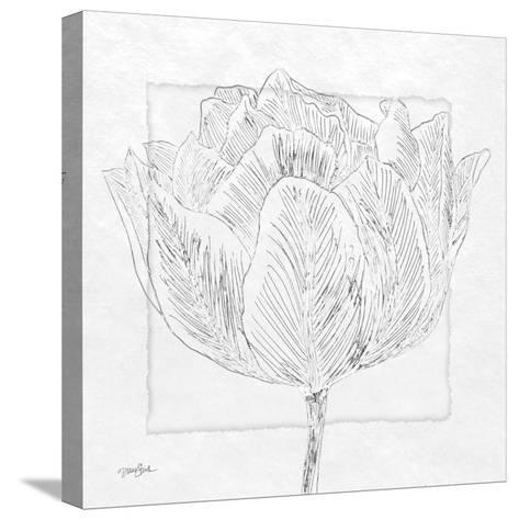 Tulipa 1-Diane Stimson-Stretched Canvas Print
