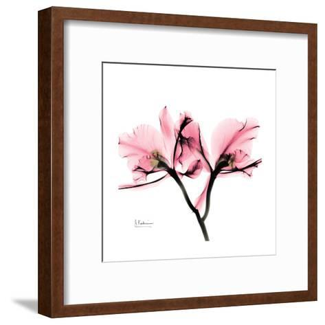 Soft Pink Orchid-Albert Koetsier-Framed Art Print