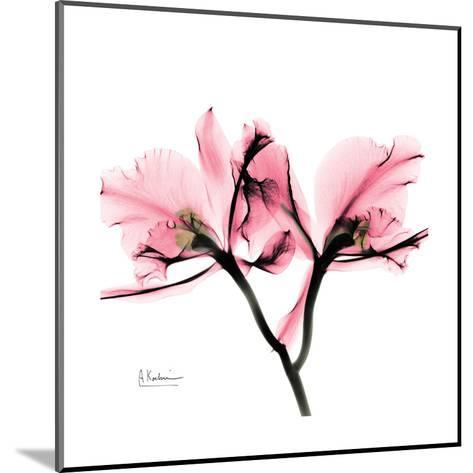 Soft Pink Orchid-Albert Koetsier-Mounted Art Print