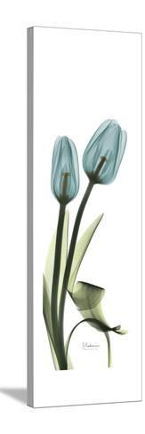 Blue Tulips-Albert Koetsier-Stretched Canvas Print