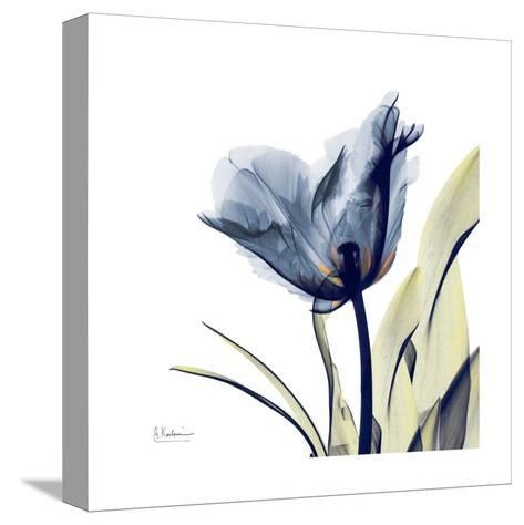Tulip Whisper-Albert Koetsier-Stretched Canvas Print