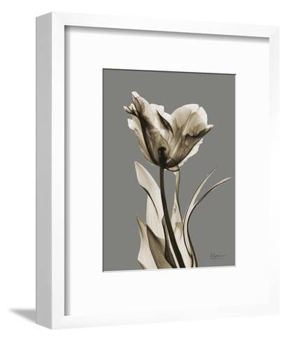Tonal Tulip on Gray-Albert Koetsier-Framed Art Print