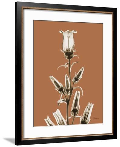 Tonal Canterbury on Mocha-Albert Koetsier-Framed Art Print