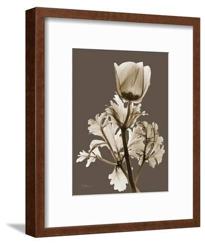 Tonal Anemone-Albert Koetsier-Framed Art Print