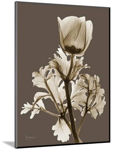 Tonal Anemone-Albert Koetsier-Mounted Art Print