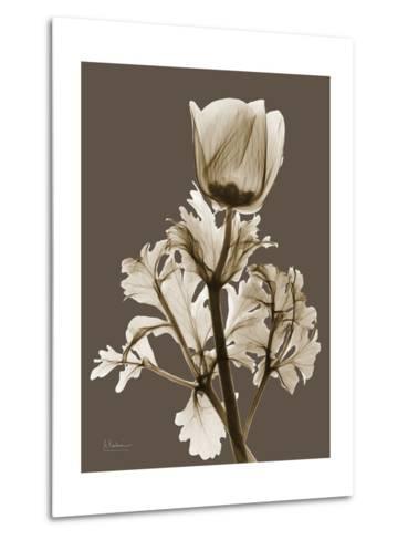 Tonal Anemone-Albert Koetsier-Metal Print
