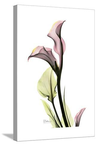 Pink Calla Lily Portrait-Albert Koetsier-Stretched Canvas Print