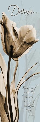 Tulip Dream-Albert Koetsier-Stretched Canvas Print