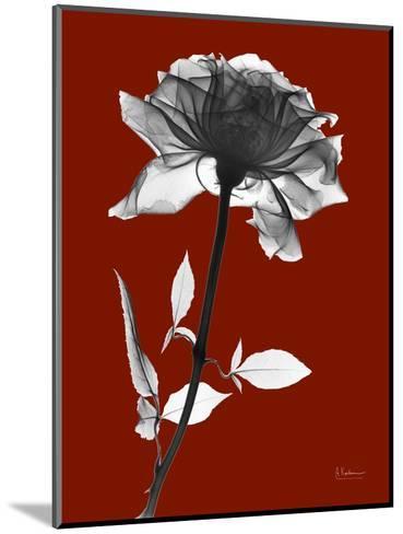 Tonal Rose on Crimson-Albert Koetsier-Mounted Art Print
