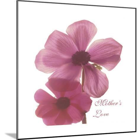 Magnolia Pair-Albert Koetsier-Mounted Premium Giclee Print
