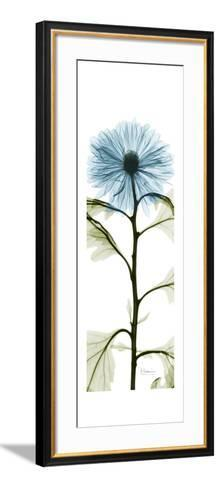 Long Blue Chrysanthemum-Albert Koetsier-Framed Art Print