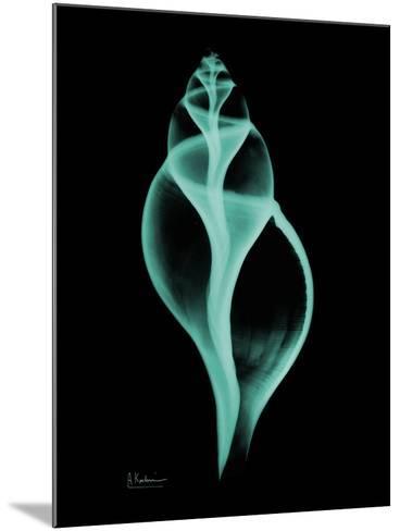 Tulip Shell-Albert Koetsier-Mounted Premium Giclee Print