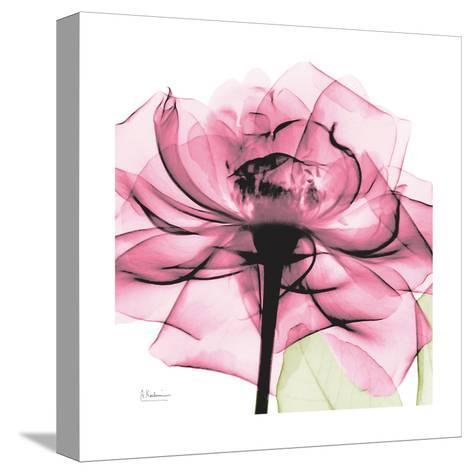 Rose Pink-Albert Koetsier-Stretched Canvas Print