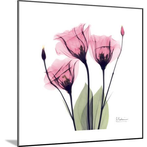 Pink Gentian-Albert Koetsier-Mounted Art Print