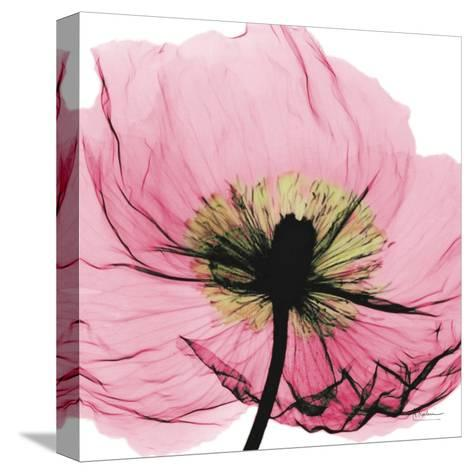 Poppy Pink-Albert Koetsier-Stretched Canvas Print