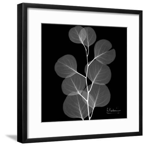 Xray Eucalyptus-Albert Koetsier-Framed Art Print
