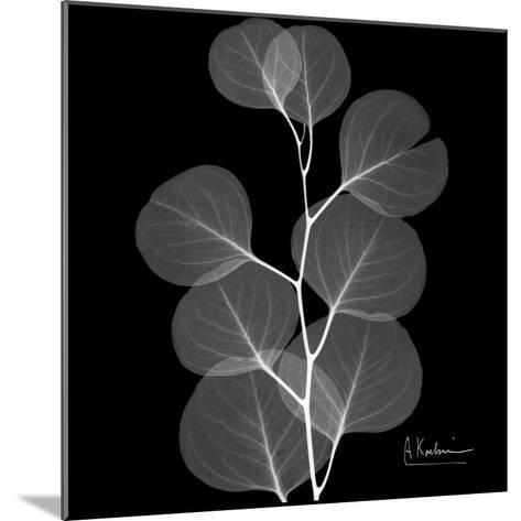 Xray Eucalyptus-Albert Koetsier-Mounted Premium Giclee Print
