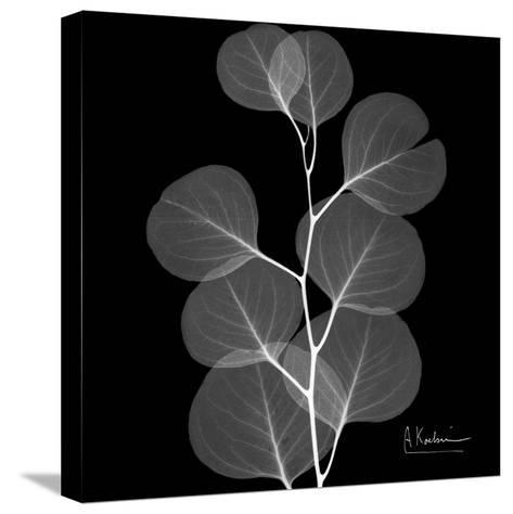 Xray Eucalyptus-Albert Koetsier-Stretched Canvas Print