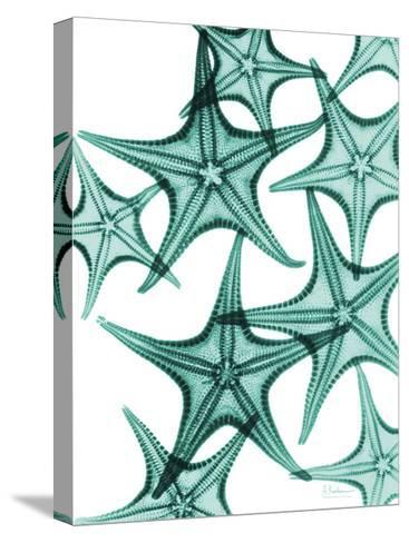 Starfish-Albert Koetsier-Stretched Canvas Print
