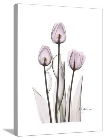 Pink Tulip Portrait-Albert Koetsier-Stretched Canvas Print