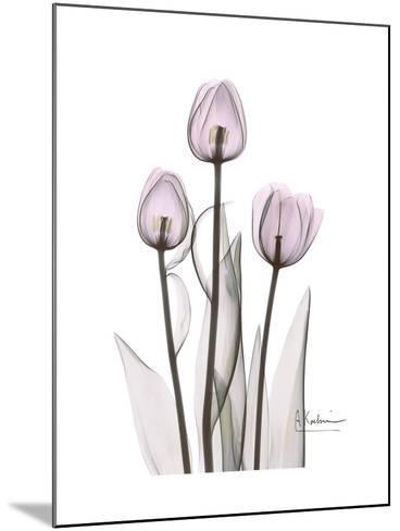 Pink Tulip Portrait-Albert Koetsier-Mounted Premium Giclee Print