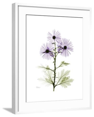 Chrysanthemum Trio-Albert Koetsier-Framed Art Print