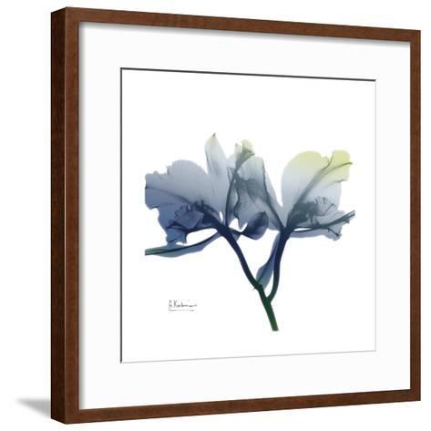Midnight Orchid-Albert Koetsier-Framed Art Print