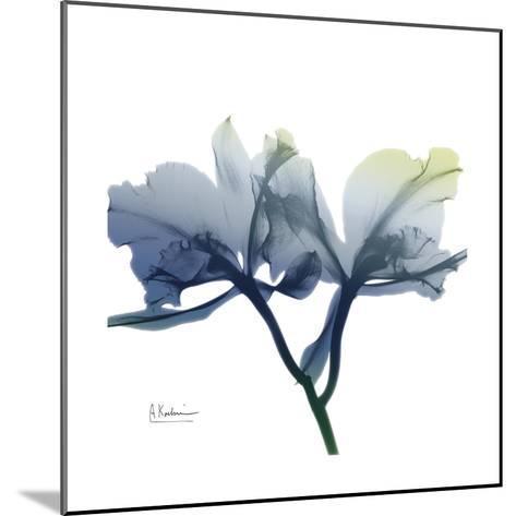 Midnight Orchid-Albert Koetsier-Mounted Art Print