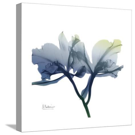 Midnight Orchid-Albert Koetsier-Stretched Canvas Print