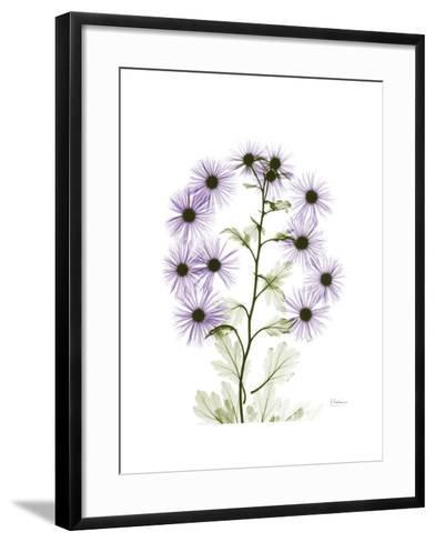 Chrysanthemum Family-Albert Koetsier-Framed Art Print