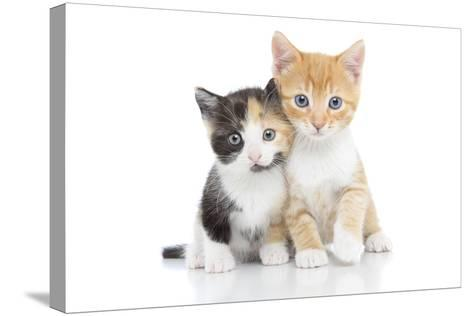 Kittens 001-Andrea Mascitti-Stretched Canvas Print