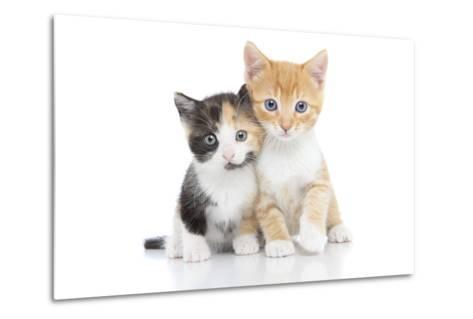 Kittens 001-Andrea Mascitti-Metal Print