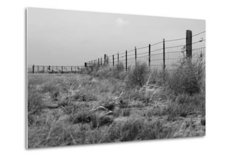 Tumbleweed Fences and Sheep-Amanda Lee Smith-Metal Print
