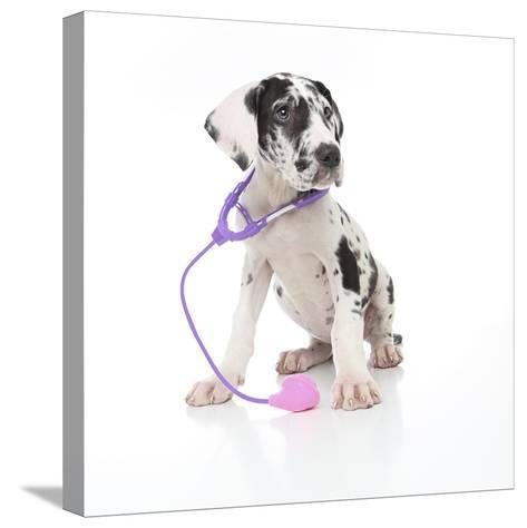 Puppies 026-Andrea Mascitti-Stretched Canvas Print