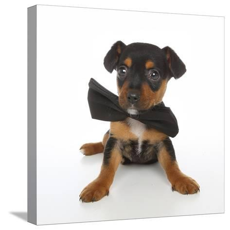 Puppies 045-Andrea Mascitti-Stretched Canvas Print