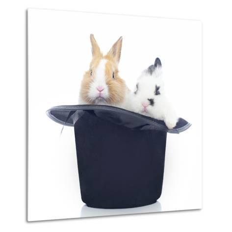 Rabbits 014-Andrea Mascitti-Metal Print