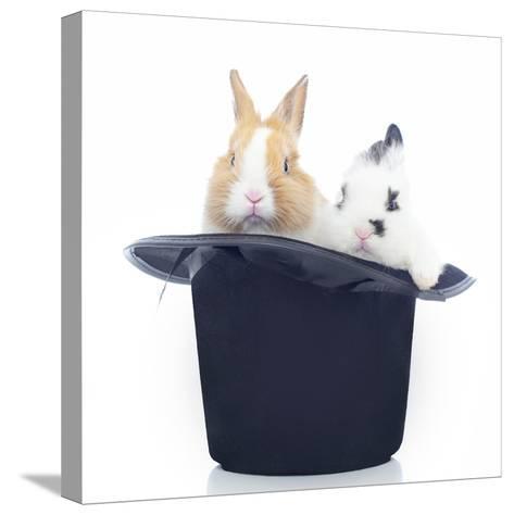 Rabbits 014-Andrea Mascitti-Stretched Canvas Print
