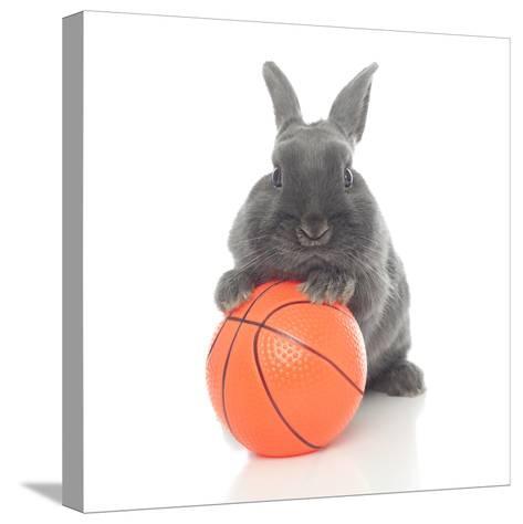 Rabbits 016-Andrea Mascitti-Stretched Canvas Print