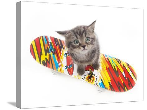 Kittens 011-Andrea Mascitti-Stretched Canvas Print