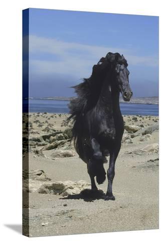 Fantasy Horses 08-Bob Langrish-Stretched Canvas Print